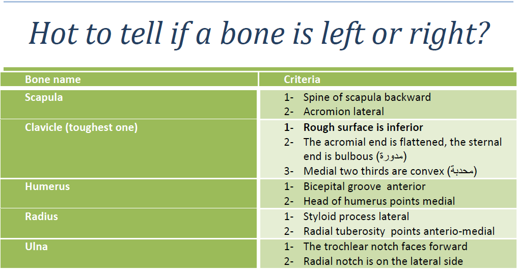 How to tell if a bone is left or right? « JUdoctors